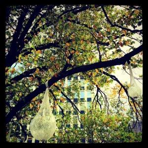 balls in tree - city